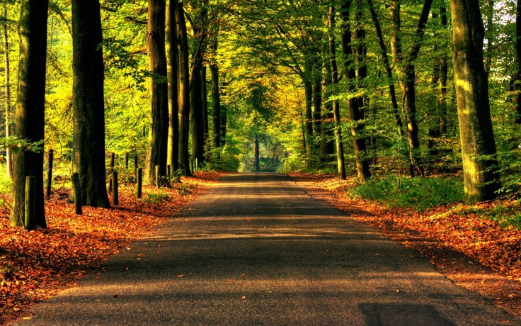 Forested road